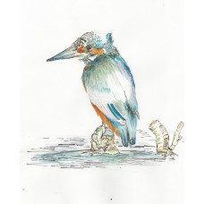 Prints - Limited Edition Prints - Kingfisher