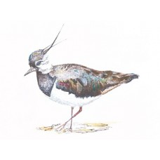 Prints - Limited Edition Prints - Lapwing