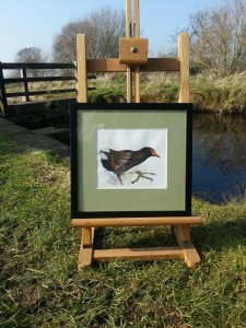Running with Moorhens £250