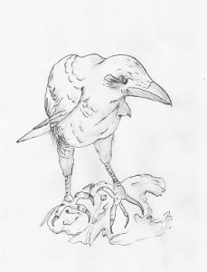 Crow chick