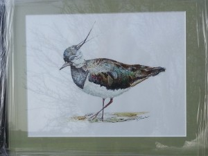 LAPWING (SOLD)
