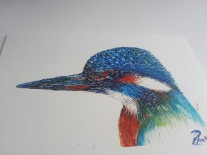Kingfisher Portraiture